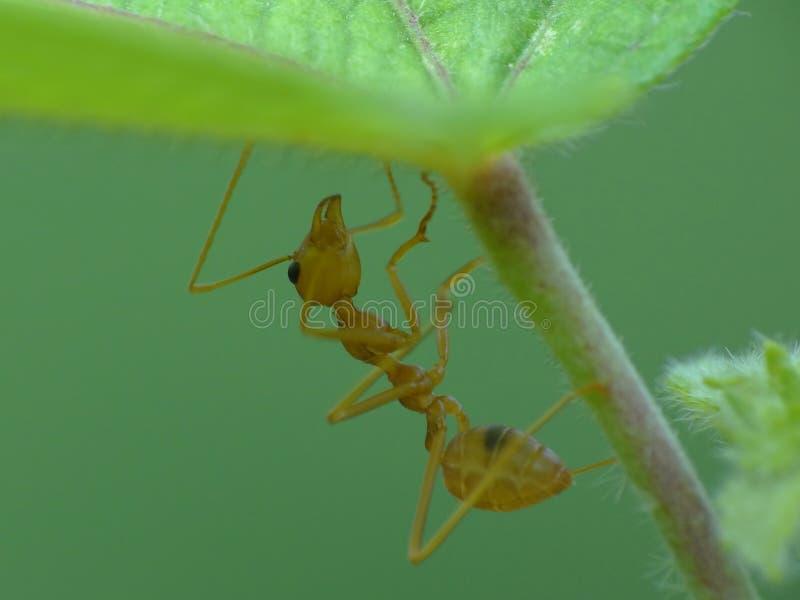 Ameise in der Aktion im Dschungel stockfotos