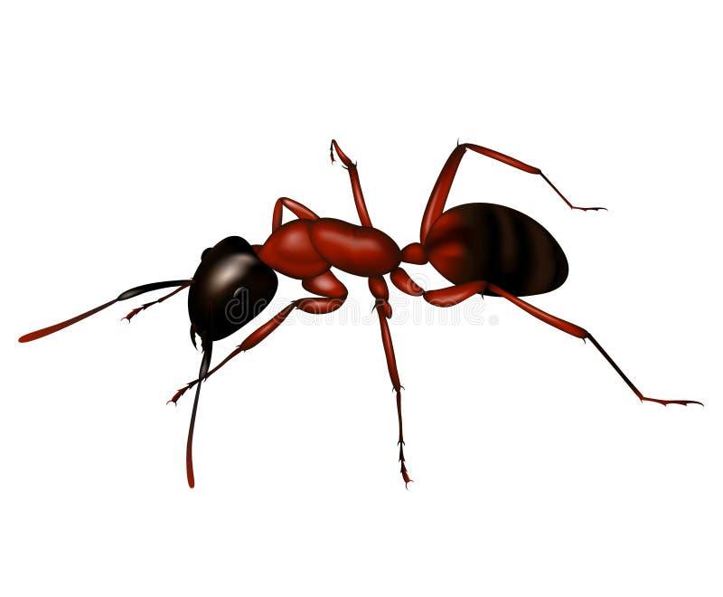 Ameise ein Schattenbild innen   stock abbildung