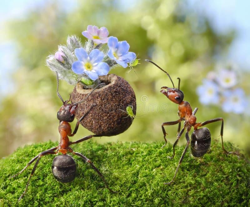 Ameise gibt Blumen mit Bonbons, Ameisengeschichten lizenzfreie stockfotografie