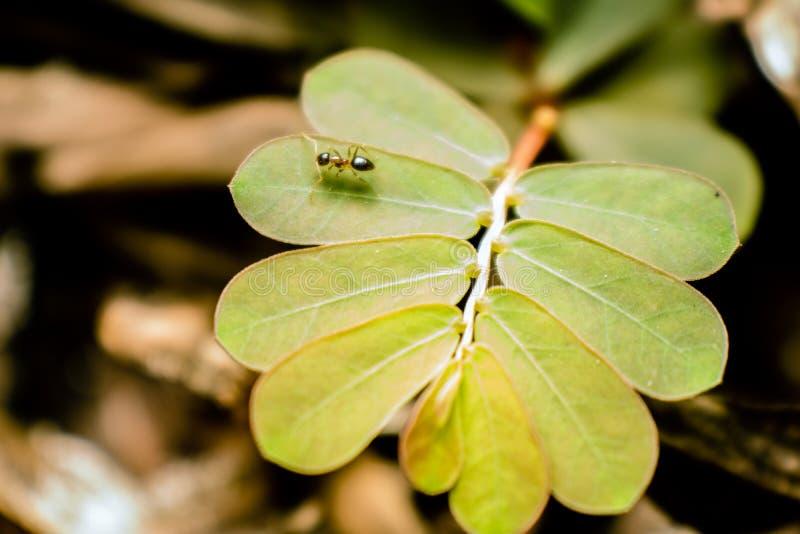 Ameise und Blatt stockbilder