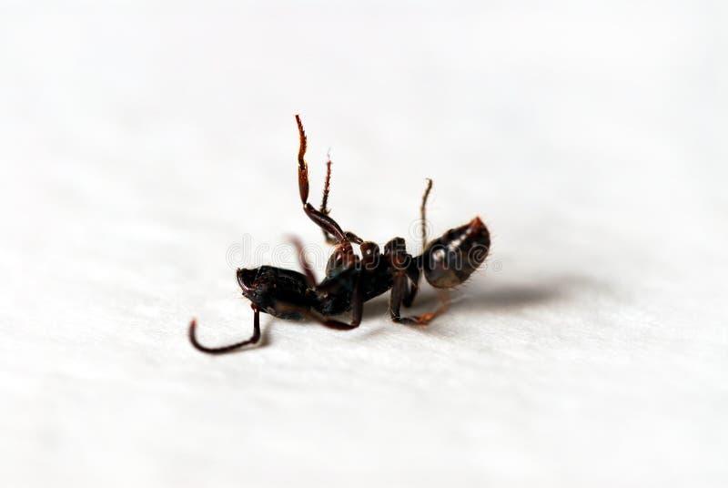 Ameisen lizenzfreie stockbilder