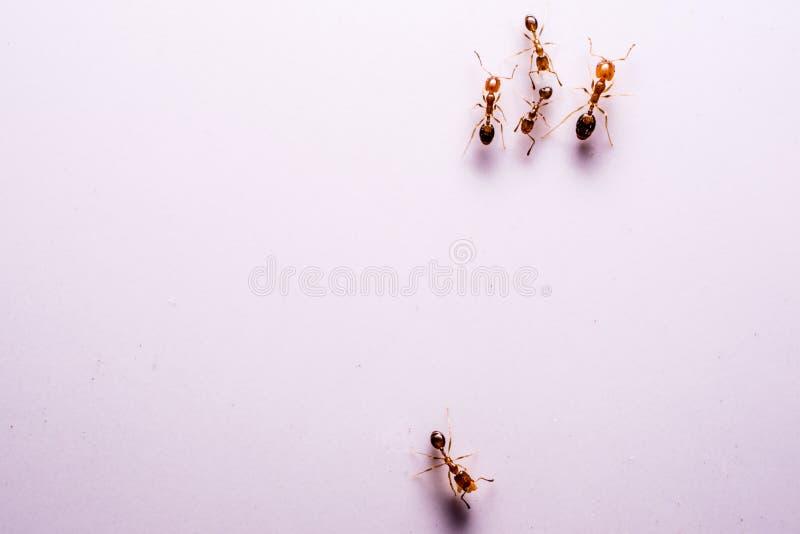 Ameisen-Kunst stockfotos