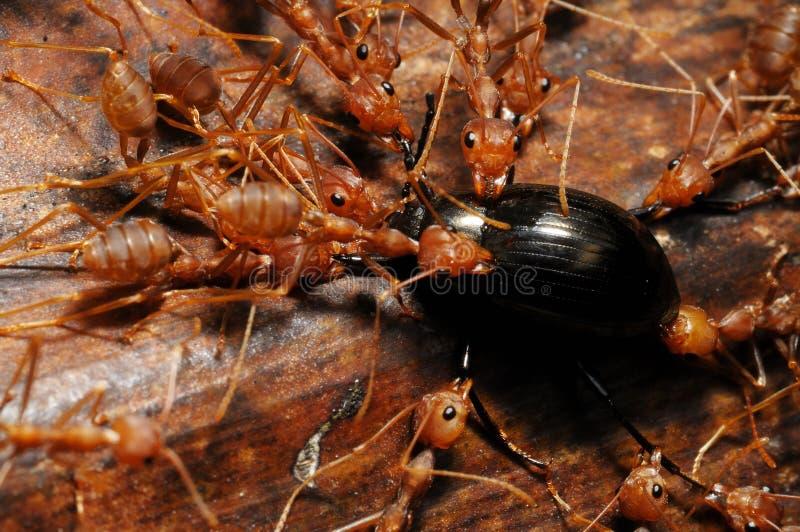 Nahrung Ameisen