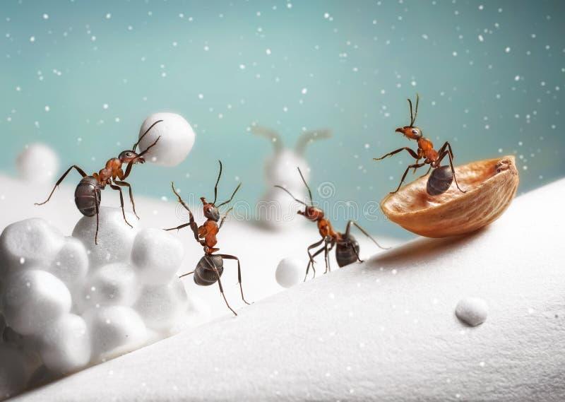 Ameisen reiten Schlitten- und Spielschneebälle auf Weihnachten stockfoto