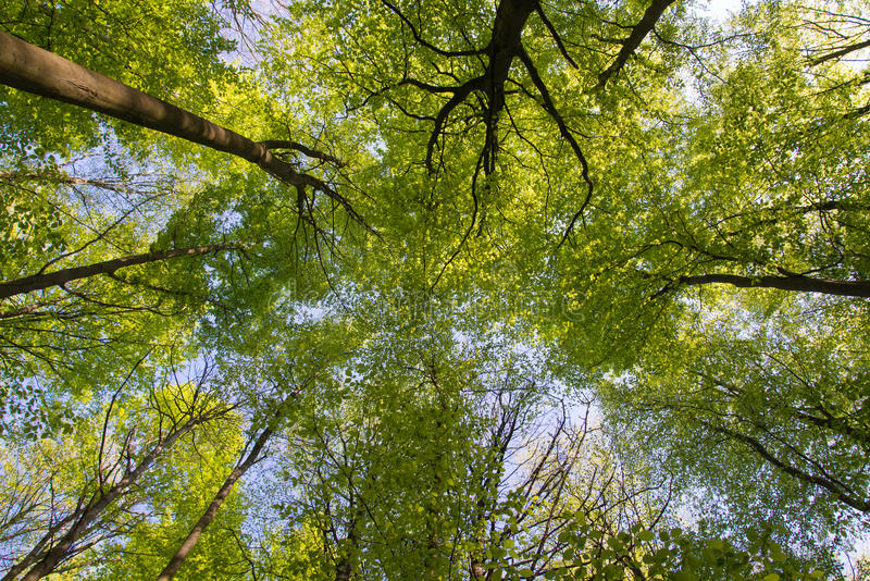 Ameisenansicht schauen oben auf Bäumen in einem Wald stockfotografie