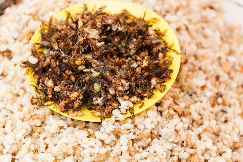 Ameiseneier lizenzfreie stockfotos