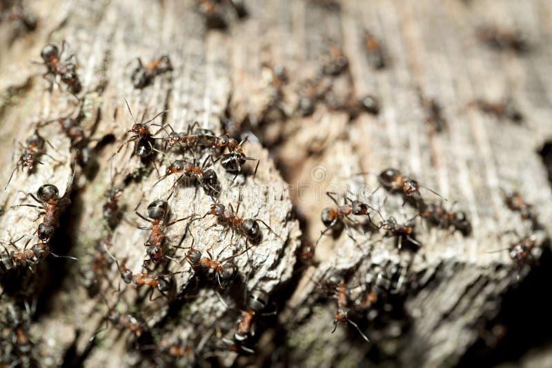 Ameisenhügel lizenzfreies stockfoto