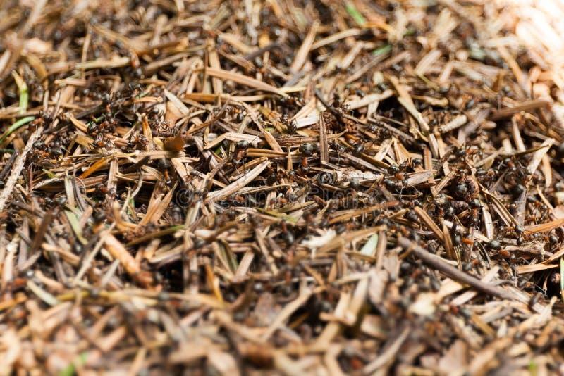 Ameisenhügelausgangshintergrund, Ameisengemeinschaft oder Kolonie lizenzfreies stockfoto