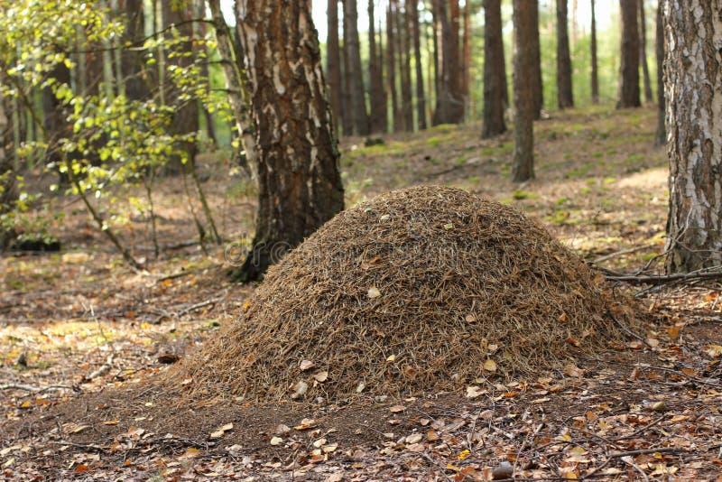 Ameisenhaufen lizenzfreie stockfotografie