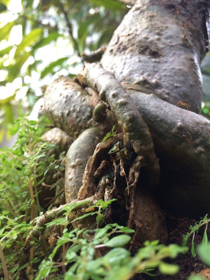 Ameisenkönigreich lizenzfreie stockfotografie