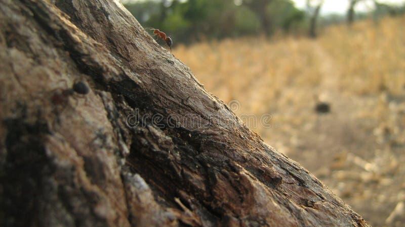 Ameisenleben stockbild