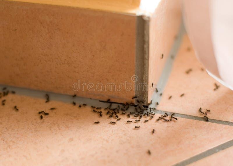 Ameisenplage lizenzfreies stockbild