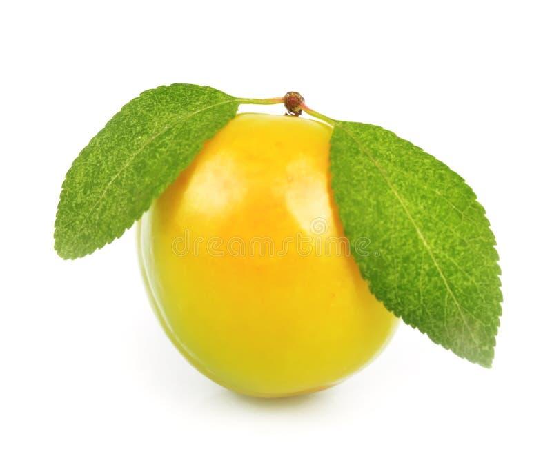 Ameixa amarela imagem de stock