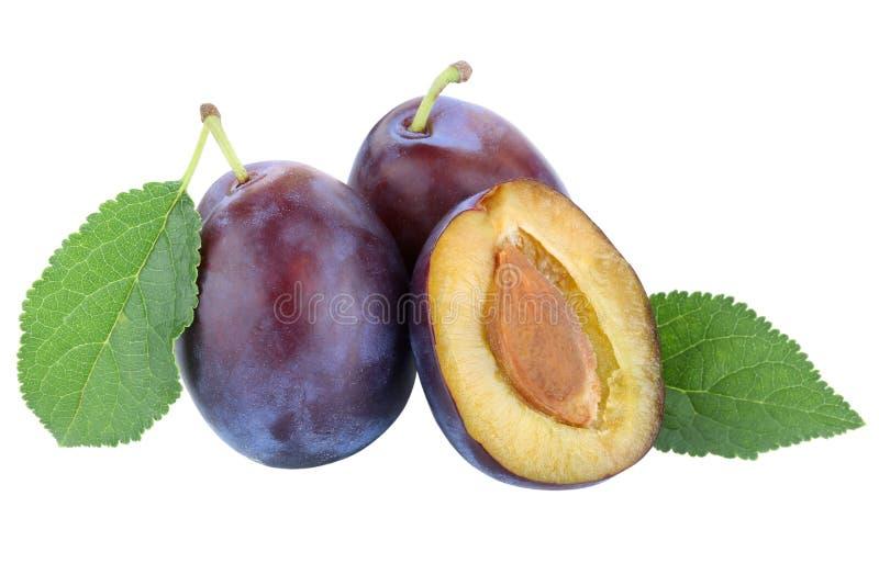 A ameixa das ameixas poda a queda do outono do fruto dos frutos frescos da ameixa seca isolada no branco imagens de stock