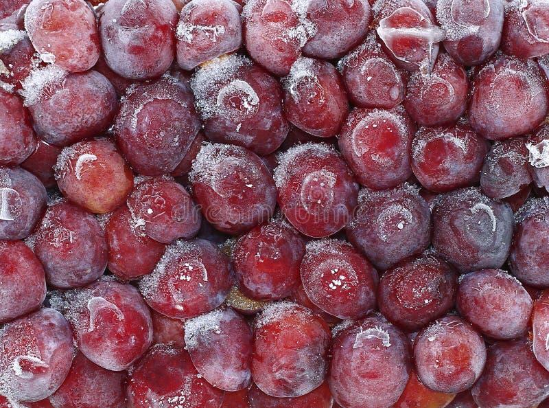 Ameixa vermelha congelada fresca dos frutos na geada foto de stock
