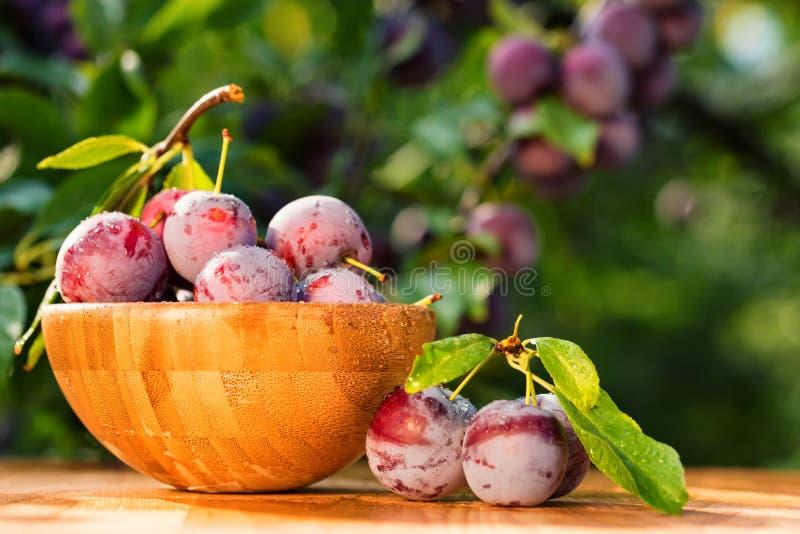 Ameixas de cereja frescas no fim de madeira da bacia fotos de stock royalty free