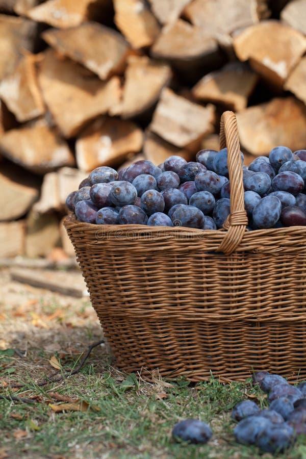 Ameixas em uma cesta imagens de stock royalty free
