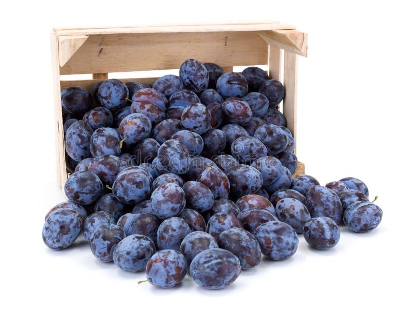 Ameixas (Prunus) na caixa de madeira fotos de stock