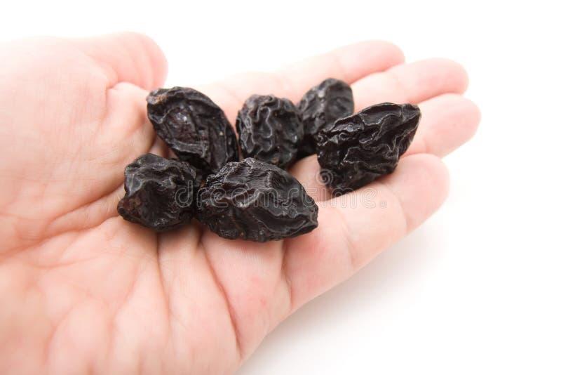 Ameixas secas nas mãos fotografia de stock royalty free