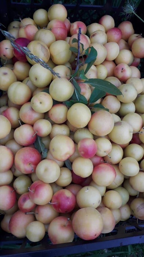 Ameixas vermelhas amarelas Siberian do russo bonito, fotografia macro imagem de stock