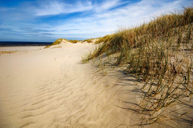 ameland海滩荷兰海岸的沙丘 库存图片