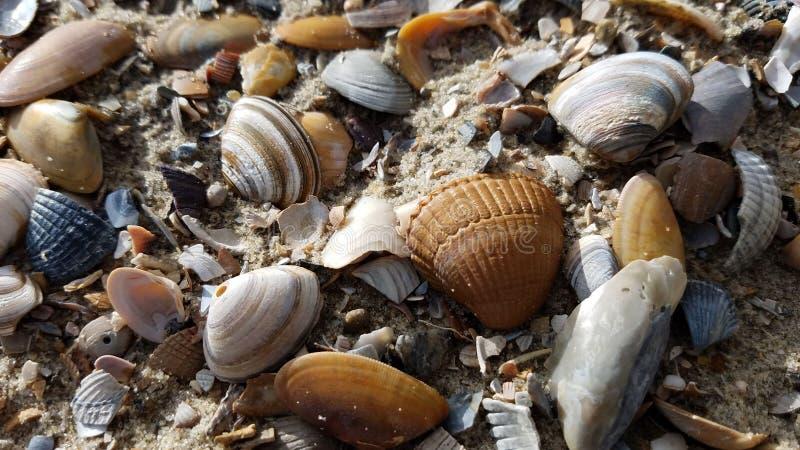 Ameland, Shell setzen auf den Strand stockfotografie