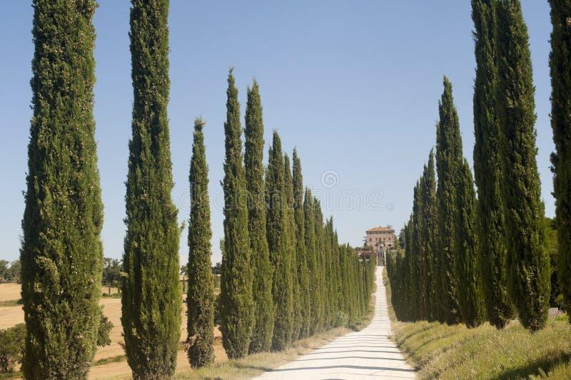 Amelia (Úmbria, Italy) - casa de campo e ciprestes velhos fotografia de stock royalty free