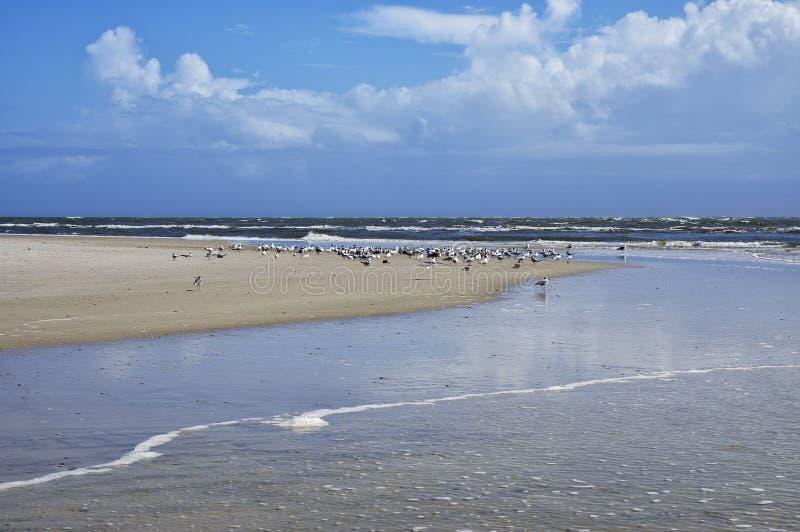 The Amelia Island, Fernandina Beach, Florida, USA. The Amelia Island Florida, Fernandina Beach is occupied by wild birds, Florida, USA royalty free stock images