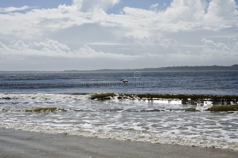 The Amelia Island, Fernandina Beach, Florida, USA. The Amelia Island Florida, Fernandina Beach is occupied by wild birds, Florida, USA stock images