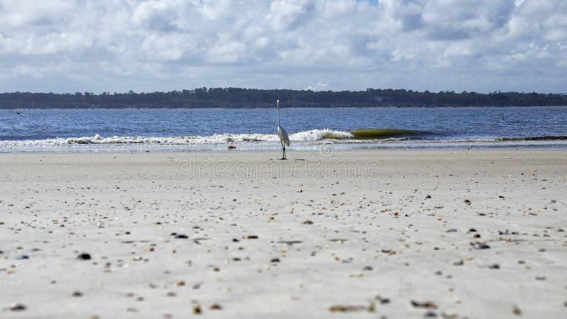 Fernandina Beach is occupied by wild birds, Florida, USA. The Amelia Island Florida, Fernandina Beach is occupied by wild birds, Florida, USA royalty free stock images