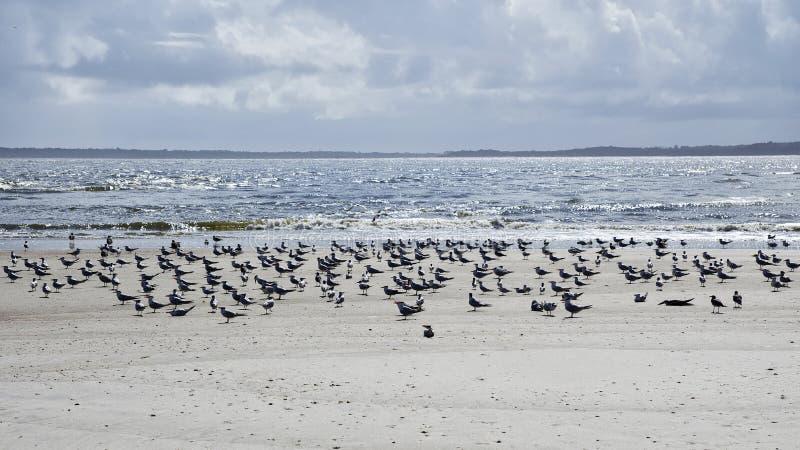 Fernandina Beach is occupied by wild birds, Florida, USA. The Amelia Island Florida, Fernandina Beach is occupied by wild birds, Florida, USA stock images