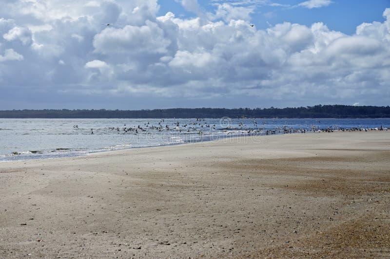 Fernandina Beach is occupied by wild birds, Florida, USA. The Amelia Island Florida, Fernandina Beach is occupied by wild birds, Florida, USA stock photography