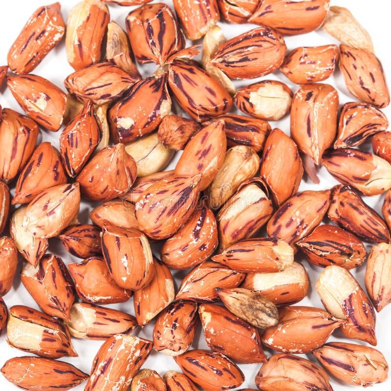 Amendoim do tigre no branco fotografia de stock royalty free