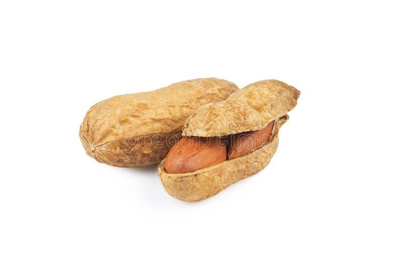 Amendoim na casca de noz isolada no fundo branco composição dos amendoins foto de stock