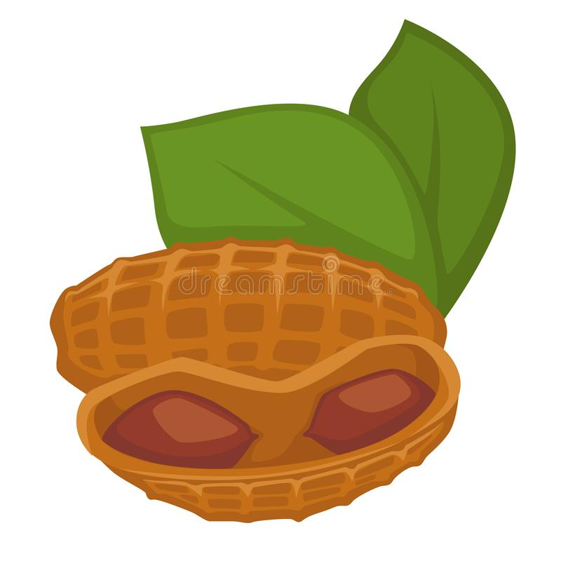 Amendoim no escudo e no alimento biológico isolado folhas da porca ilustração royalty free