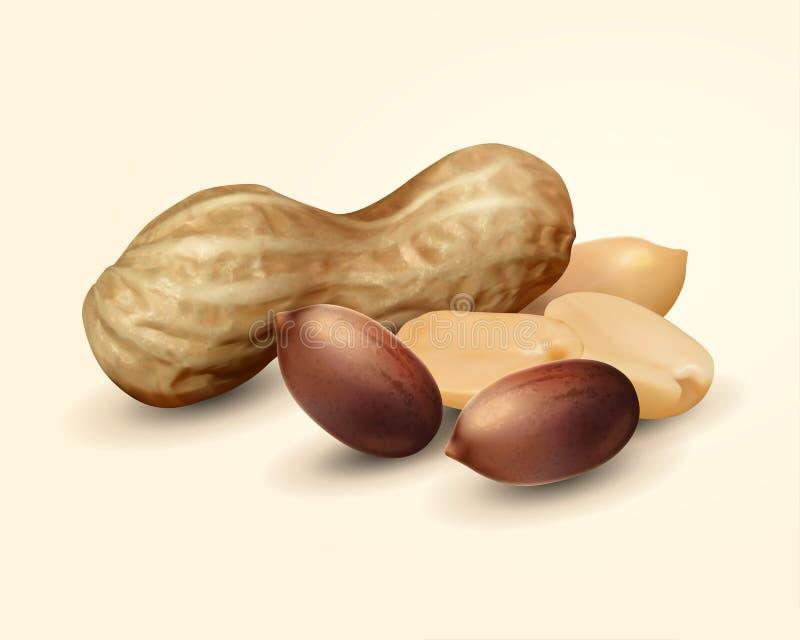 Amendoim no shell ilustração royalty free