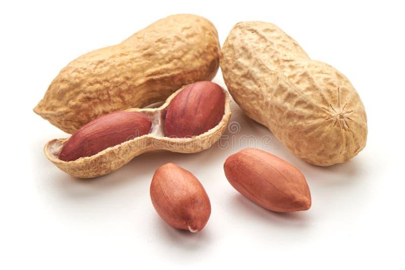 Amendoim ?til, close-up, isolado no fundo branco fotos de stock royalty free