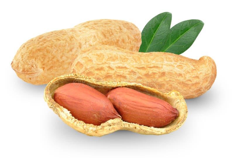 Amendoins com folha foto de stock
