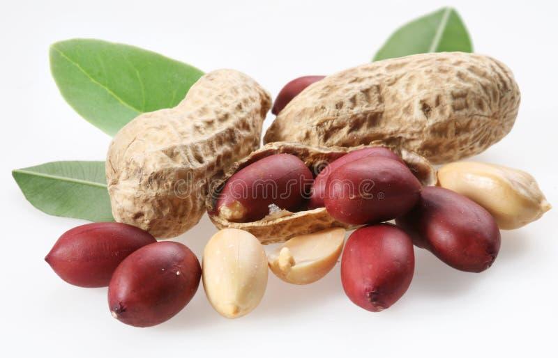 Amendoins com folhas. foto de stock