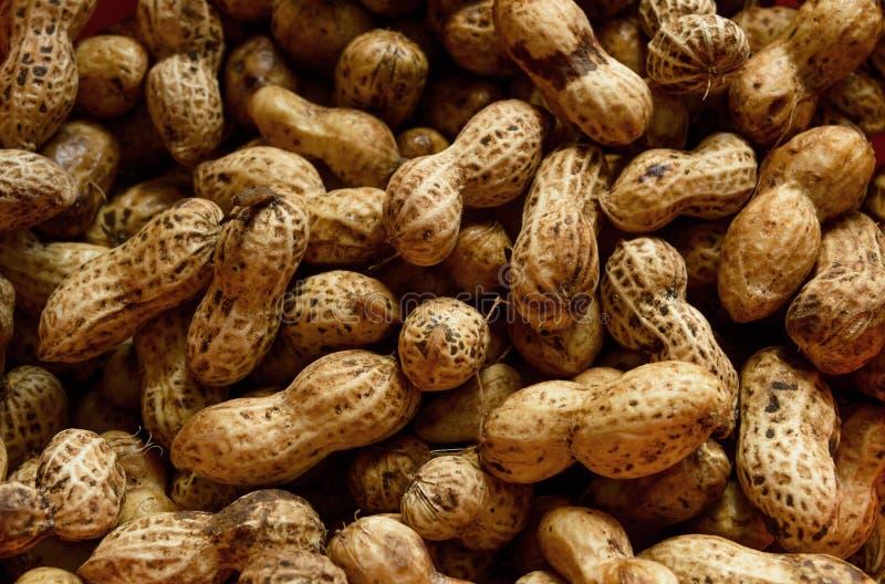 Amendoins crus fotos de stock royalty free