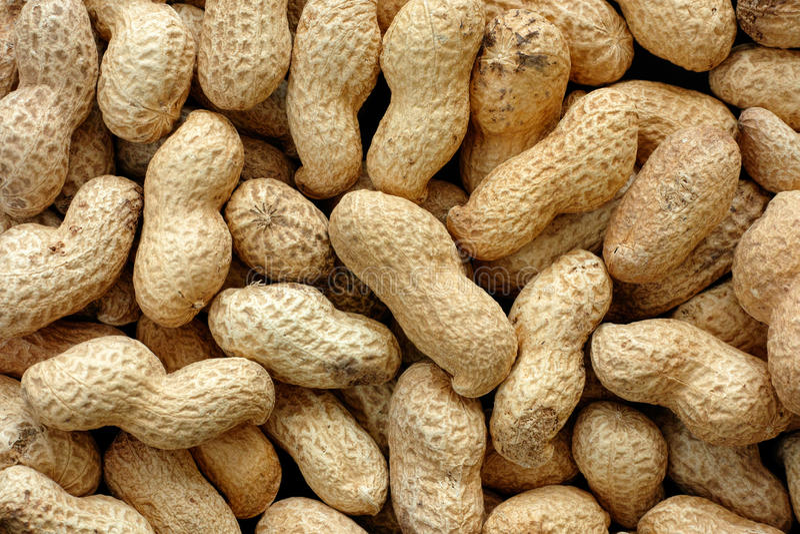 Amendoins no escudo foto de stock royalty free