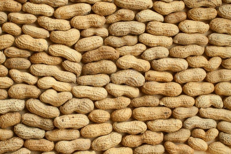 Amendoins no escudo fotografia de stock royalty free