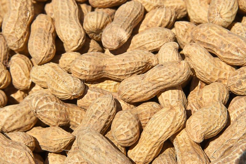 Amendoins no fundo dos escudos imagens de stock royalty free