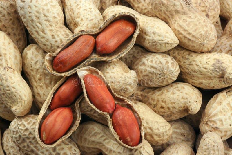 Amendoins Roasted imagens de stock