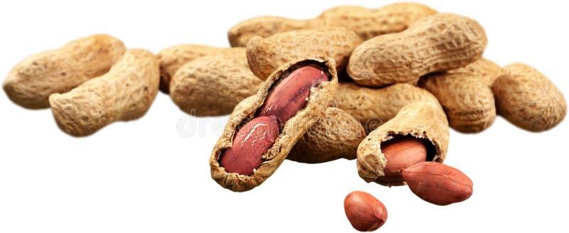 Amendoins secados no close up no fundo branco imagem de stock royalty free