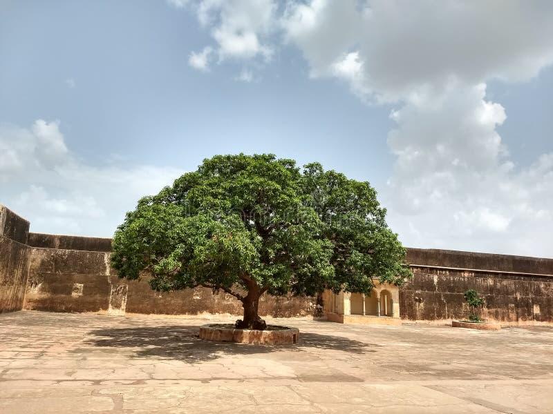 Amer Fort imagenes de archivo
