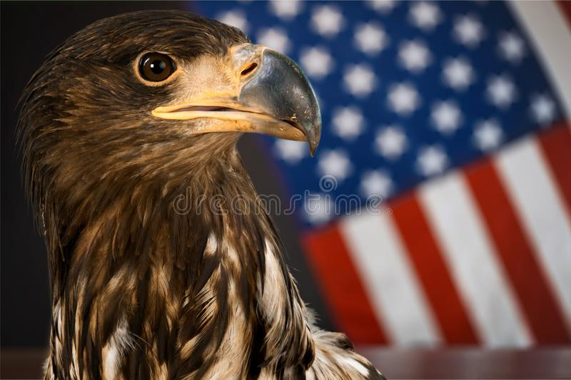 America royalty free stock photography