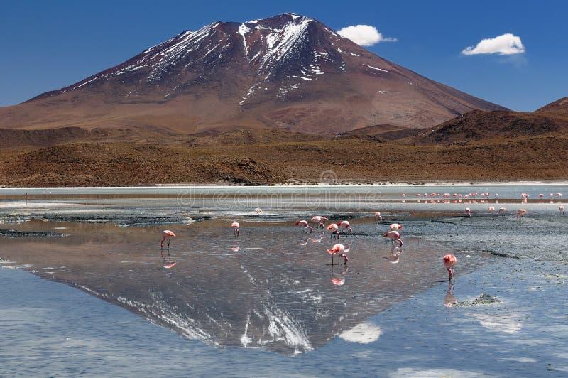 america Andes beautifull Bolivia rabatowego chilean delikatni wzgórza kształtują teren najwięcej pobliski prawie przestankujących zdjęcia royalty free