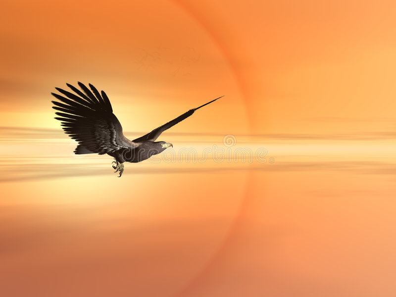 American bald eagle royalty free illustration
