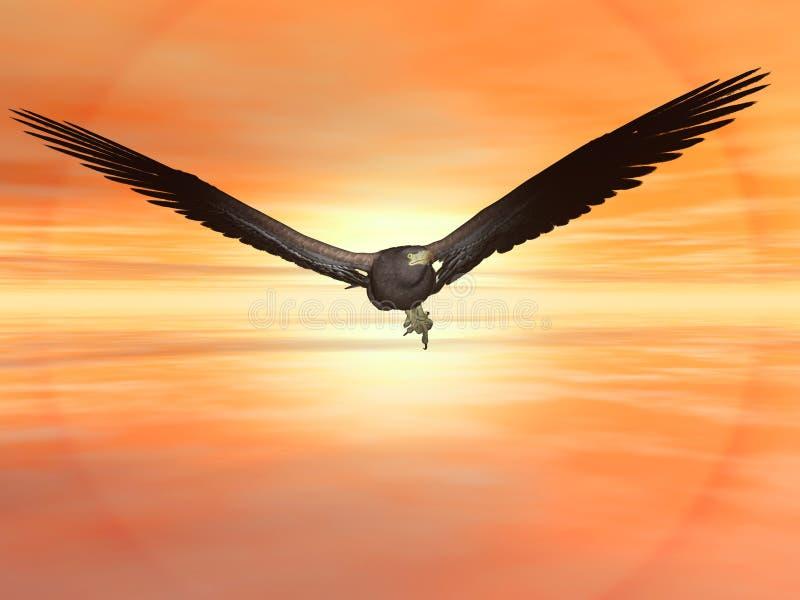 American bald eagle stock illustration